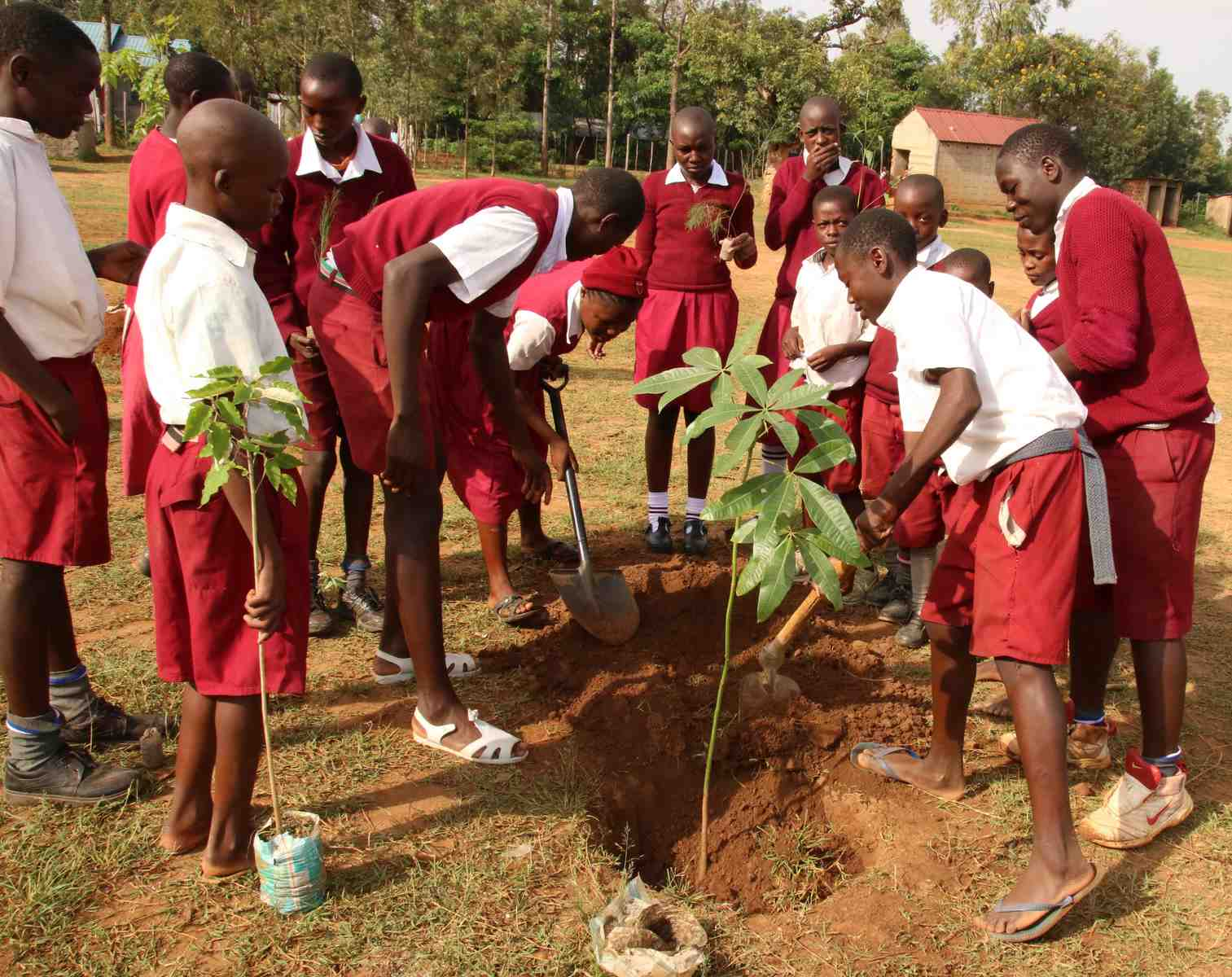 Tree Planting at Sinoko Primary School