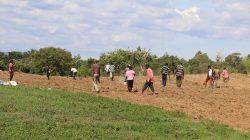 Maize-planted-on-the-Sirisia-Farm_1