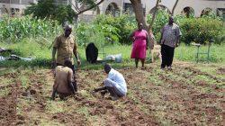 IGU-Planting-Fodder-at-the-University-Farm_1