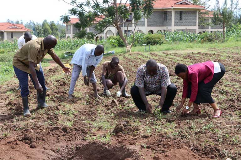 IGU Planting Fodder at the University Farm
