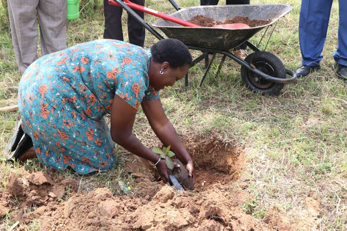 Donate-Indigenous-Trees-to-Kibabii-University_1